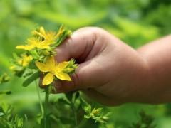 甘肃省植物提取物首次实现出口