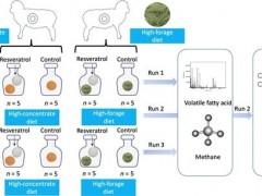研究揭示植物提取物分别在高精料和高粗料下调控瘤胃甲烷产生机制