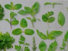 天然植物提取物兽用作用,饲用植物及其提取物在饲料替抗中的应用