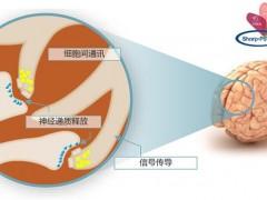 磷脂酰丝氨酸PS营养价值 老年人脑活力的关键