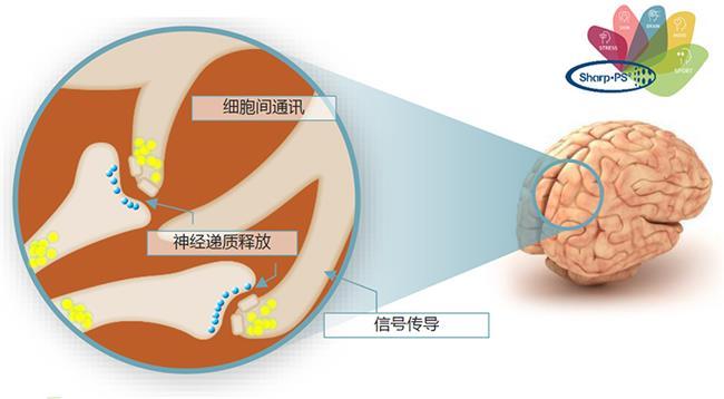 磷脂酰丝氨酸1