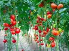 我国植物提取物行业亟须健全标准体系