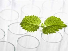 《中国植物提取物产业白皮书》正酝酿出炉