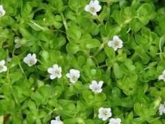 未来市场应用潜力比较高的几种植物提取物