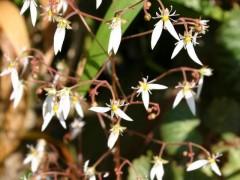 """一种天然植物提取物有望成为对抗皮肤炎症的""""武器"""""""