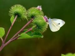 兰州海关支持甘肃省植物提取物产品扩大出口