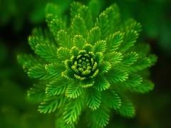 一张表看懂植物提取物